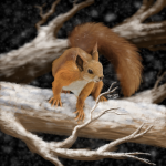 Winter red squirrel, digital painting.